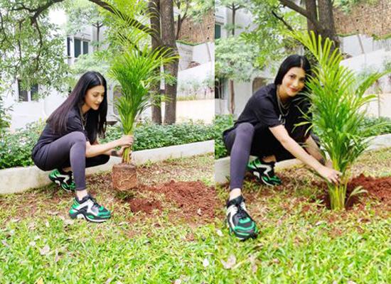 Shruti Haasan to nominate Hrithik, Rana and Tamannaah for Green India Challenge!